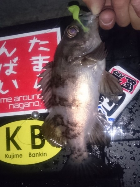 hideup 久次米良信 ブログ写真 2017/01/31