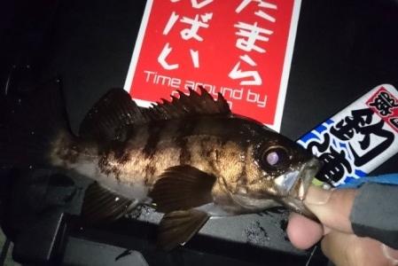 hideup 久次米良信 ブログ写真 2017/01/18