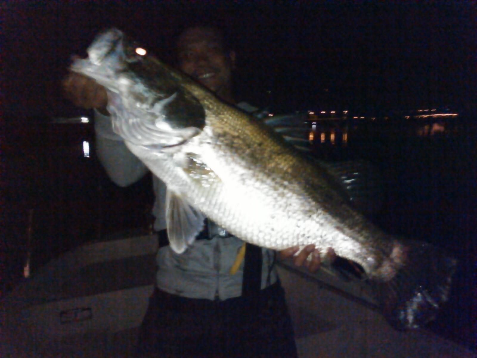 怪 魚 日本 三 大